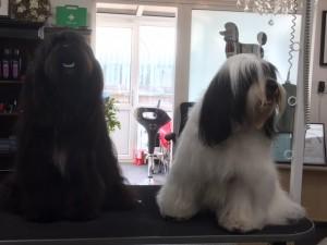 bonnie and tassie